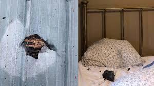 Thiên thạch xuyên qua mái nhà, 'hạ cánh' trên gối ngủ và cái kết may mắn cho chủ nhà