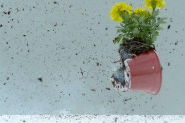 Bé gái suýt bị chậu hoa rơi từ tầng thượng tòa nhà 34 tầng va trúng người