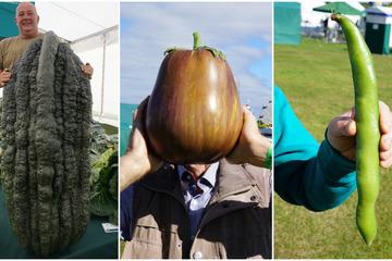 Rau củ siêu to khổng lồ, phá lỡ nhiều kỷ lục xuất hiện trong cuộc thi ở Anh