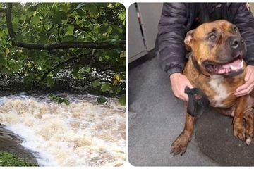 Chú chó siêu may mắn sống sót sau 7 ngày bị rơi xuống dòng sông chảy xiết