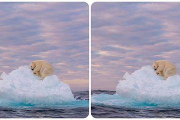 Bức ảnh gấu Bắc cực ngủ trên tảng băng báo động về biến đổi khí hậu