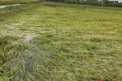 Hàng trăm tỉ đồng ở huyện biên giới Ea Súp 'trôi' theo dòng nước lũ