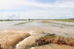 Nước lũ nhấn chìm hàng ngàn hecta lúa, hoa màu ở huyện biên giới Đắk Lắk