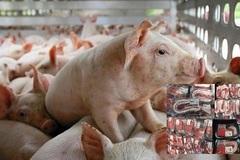 Giá lợn thấp, giá thịt cao, người nuôi thua lỗ, người tiêu dùng bị 'móc túi'
