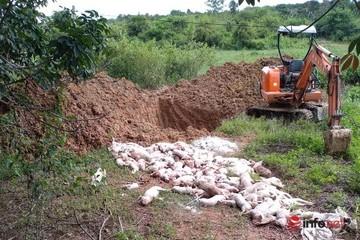 Thưởng nóng 1 triệu đồng cho người báo tin phát hiện chôn lợn bệnh trái phép