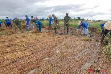 Thanh niên, bộ đội gặt lúa, dọn đồng giúp nông dân vùng 'rốn lũ' ở Đắk Lắk