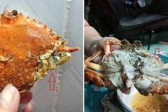 'Sinh vật lạ' nhỏ xíu bám trên mang cua biển khiến dân mạng tò mò