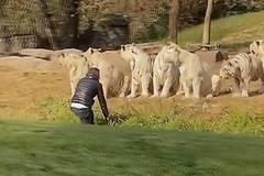 Hành động coi thường mạng sống của nam du khách khiến nhân viên sở thú 'toát mồ hôi'